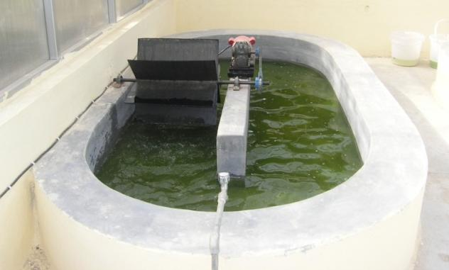 Technology for Mass Production of Green Algae