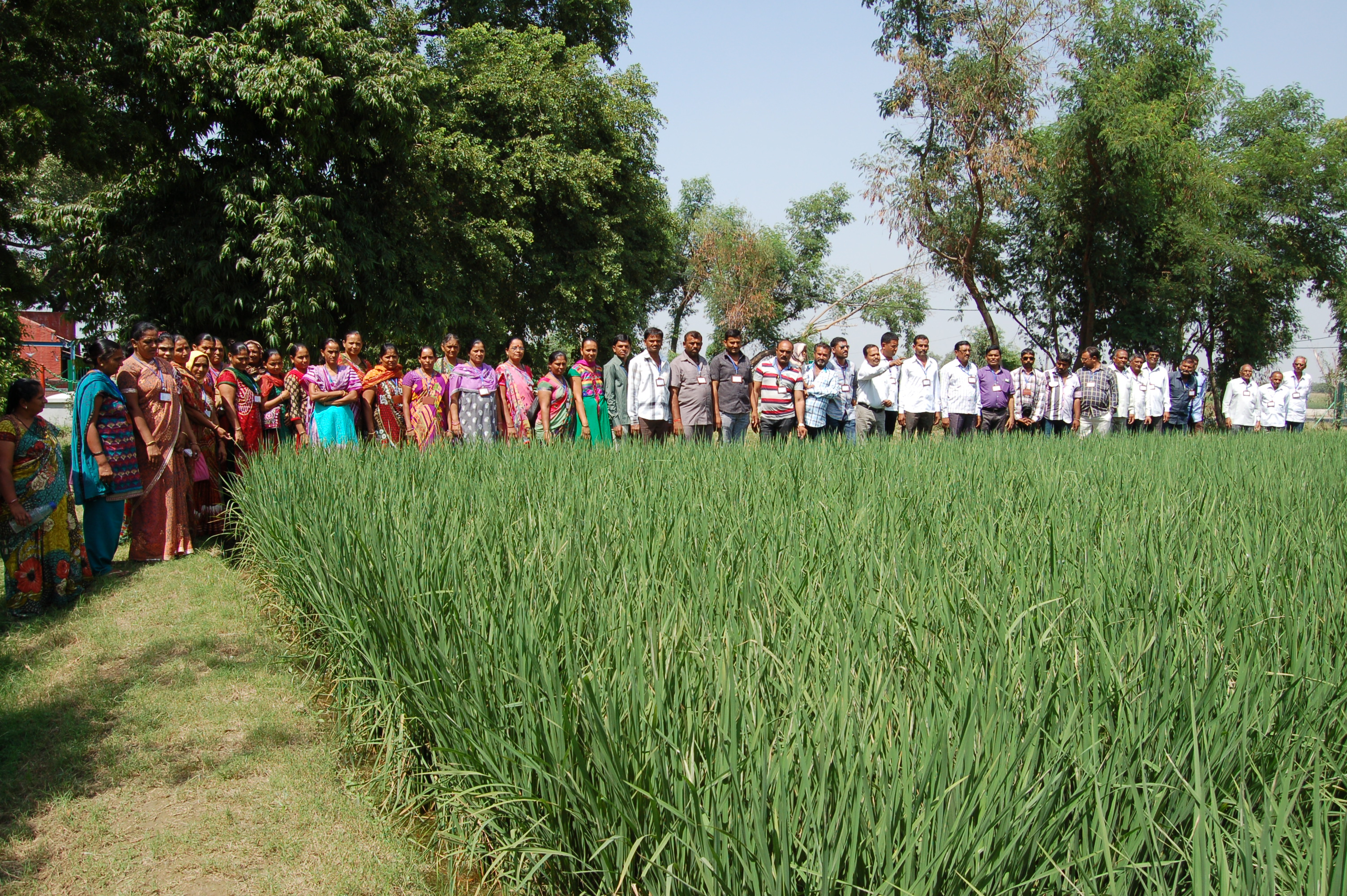 Farmers at ATIC Crop Cafeteria